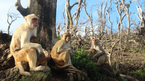 These monkeys formed an unlikely friendship after a hurricane wrecked their home