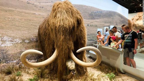 Woolly mammoth resurrection project receives $15 million boost