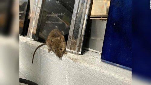 Mouse plague forces Australian prison to evacuate
