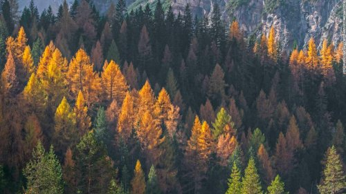 Trees are losing leaves earlier because of climate change