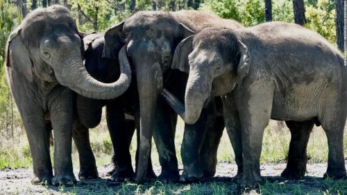 Retired circus elephants get new home with plenty of room to roam