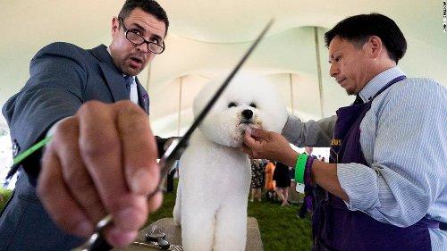 Photos: The 2021 Westminster Dog Show