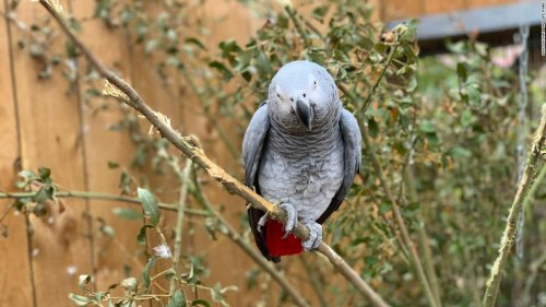 Parrots in wildlife park moved after swearing at visitors