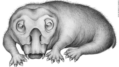 Evidence suggests an animal that roamed with the dinosaurs went into a hibernation-like state to survive
