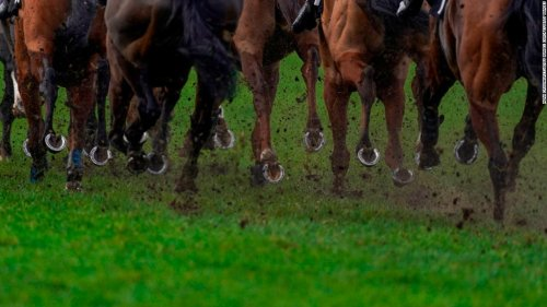 Horse racing faces fresh scrutiny after footage appears of a jockey posing on a dead horse