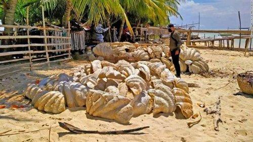 Philippines seizes fossilized giant clam shells worth $25 million