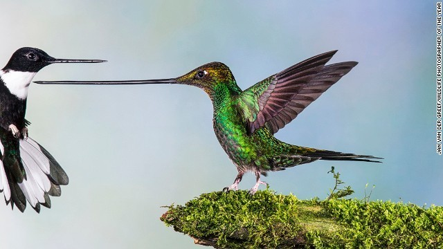 Wildlife Photographer of the Year 2014 awards announced