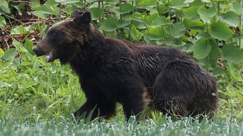 Bear shot dead after attacking four people in residential area in Japan