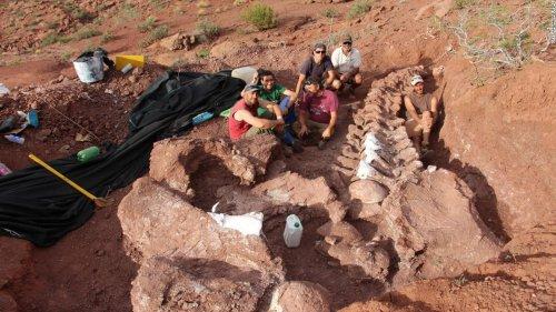 Fossils of huge Ninjatitan dinosaur that lived 140 million years ago found in Argentina