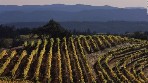 A winery will pay you $10,000 a month to work and live rent-free in Sonoma