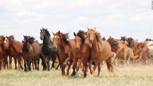 The moment domesticated horses changed the course of human history is now revealed