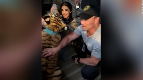 Tiger missing in Houston found safe, police say