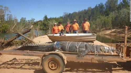 After 8-year search, Australian rangers capture massive crocodile - CNN