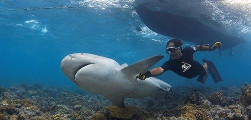 Profiling sharks to eliminate killers