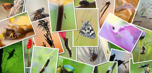 Déclin des insectes : l'urgence d'agir