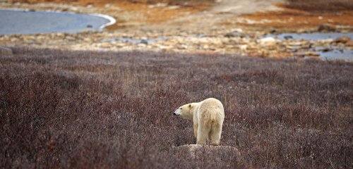 Biodiversity loss and climate change must be addressed together