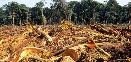 Existe-t-il un point de non-retour dans les écosystèmes ?