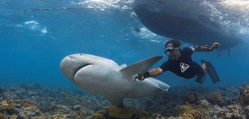 « Les requins aussi possèdent des personnalités »