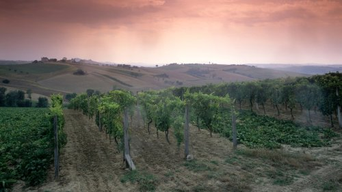 The Italian Wine Regions You Should Visit Next