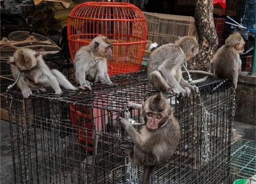 Trade of baby primates difficult to monitor, Bali authorities say