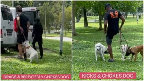 Singapore canine school hounded for kicking, choking dogs (Video)