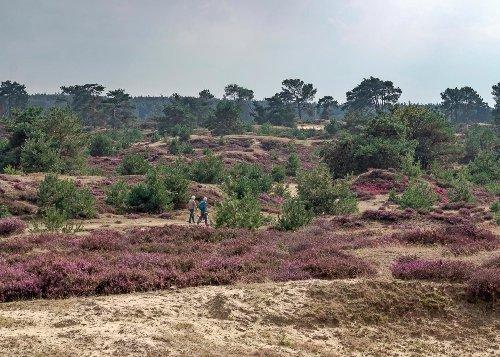 Welk Nederlands nationaal park past bij jou? Een handig overzicht