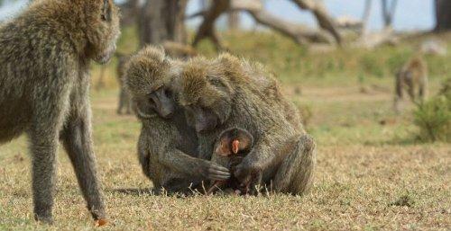 Discovery's Serengeti Gets Season 2 Premiere Date