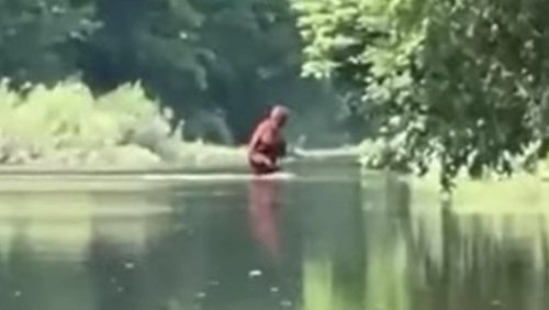 New Bigfoot Sighting in Michigan Has Experts Confused