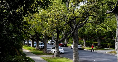 Deadly Disparity: Closing the Tree Equity Divide