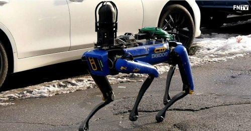 'This Is Crazy': Jamaal Bowman Excoriates NYPD DigiDog Robotic K-9