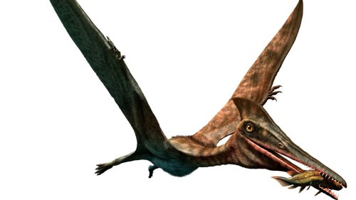 Researchers Say the Largest Flying Creature in History Had a Neck Longer Than a Giraffe's
