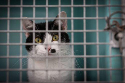 "British Man Known As ""Brighton Cat Killer"" Sentenced To Jail After Stabbing 16 Cats"