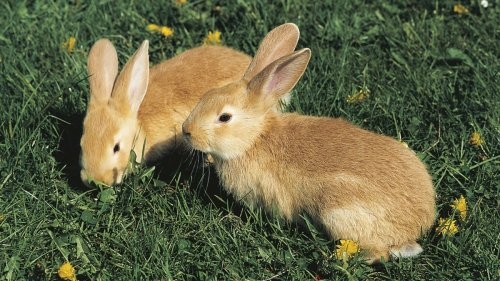 Illinois Woman's 47 Pet Rabbits Rescued from Her Hotel Room