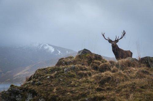 Qué es el Rewilding, la nueva forma de cuidar la Naturaleza por la que apuestan países como Escocia