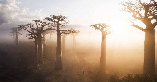 The most amazing and unusual trees in the world in pictures