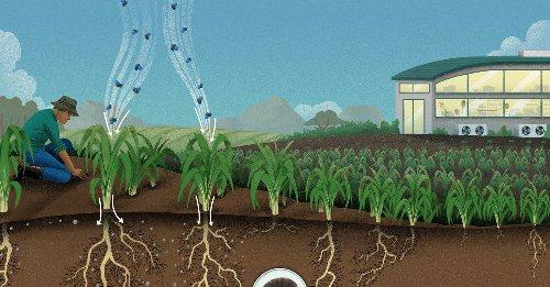 Supercharged soil could pull carbon right out of the air