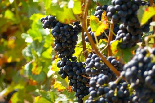 10 vinos del Priorat que hay que catar | Con El Morro Fino