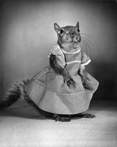 When a cross-dressing squirrel captivated the nation