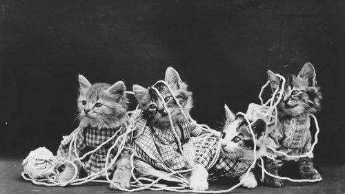 Funny cat photos: see the vintage photos by Harry Frees   Considerable