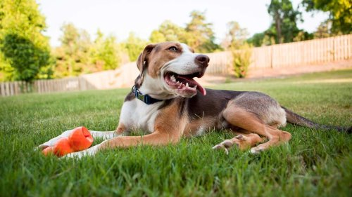 How to Get a Deal on Pet Supplies Online
