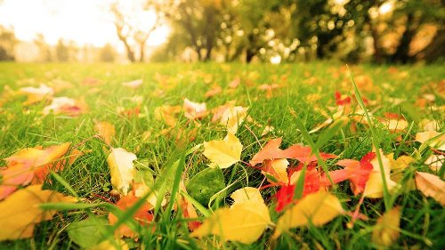 For the Greenest Yard, Leave the Leaves Behind