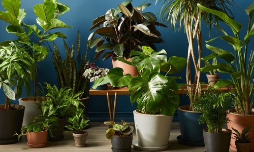 Where to Buy Indoor Plants Online | Cool Material