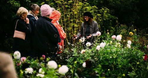 West Cork flower farmer offers free blooms for a helping hand