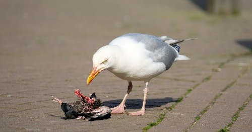 We want to know what you really think about seagulls