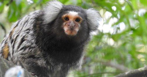Cornwall monkey sanctuary faces very uncertain future