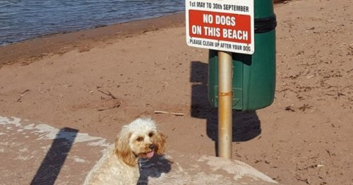 Beaches you'll be able to walk your dog on
