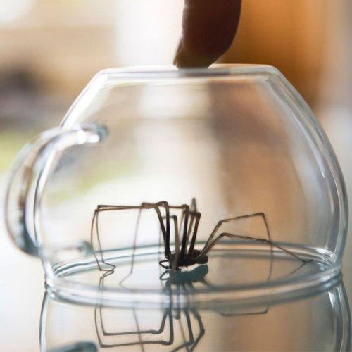 Unglaublich!: DAS passiert WIRKLICH mit einer Spinne im Staubsauger