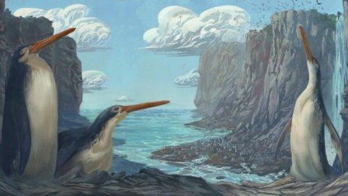 Junior fossil hunters discover extinct giant penguin