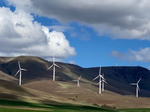 America's Largest Windfarm: an Environmental Disaster?