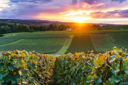 How Are Champagne Brands Addressing Sustainability?